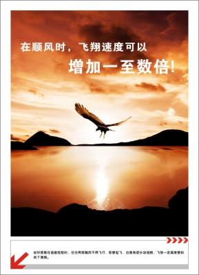 G6-05:在顺风时,飞翔速度可以增加增加1至数倍!(如环颈雉在逃避危险时,往往用奔跑而不用飞行,即便起飞,也是急促扑动翅膀,飞到一定高度便斜向下滑翔。)