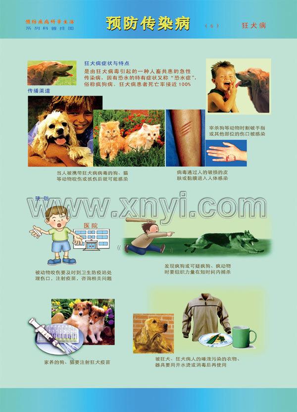 狂犬病的预防挂图